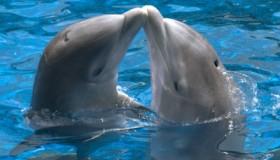 delfíni1